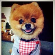 รูปของ Dog Republic