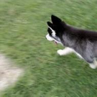 รูปของ Love husky