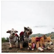 รักหมาพันธุ์ชเนาเซอร์