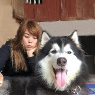 รูปของ Meetung husky