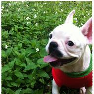 Chihuahua2u.com