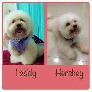รูปของ teddy-hershey