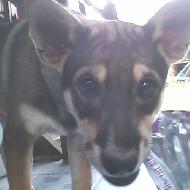 รูปของ I_like_Dog