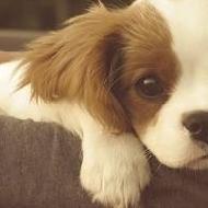 PupPy_DoGz