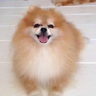 รูปของ dogshomelover