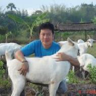 รูปของ DogsFarmBansuanpai
