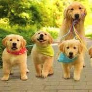 รูปของ lovely puppy