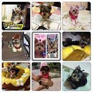 รูปของ fay&dog