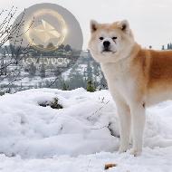 รูปของ lovelydogThaialnd