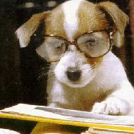 Puppy Of Potchanad
