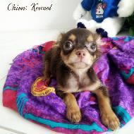 Chivas Kennel