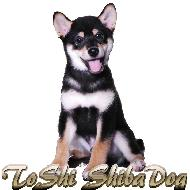 รูปของ ToShi ShibaDog