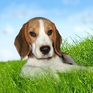 รูปของ JRdoggy