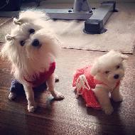 รูปของ Sunny&Snowy