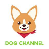รูปของ DogChannel