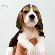 รูปของ puppyworld