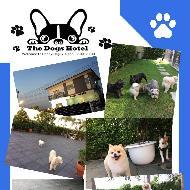 รูปของ Happy Dogky