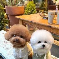 รูปของ French bulldogs
