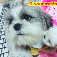 รูปของ mayimwan