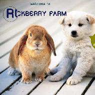รูปของ RockberryFarm