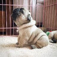 รูปของ bulldoggie_molly