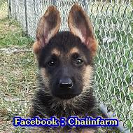 chaiinfarm