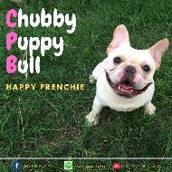 รูปของ chubbypuppybull