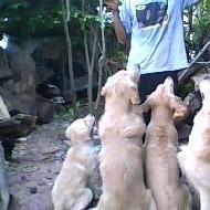 รูปของ love vary dog