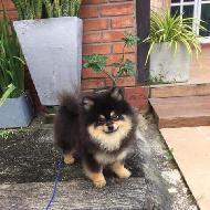 รูปของ baanlittledog