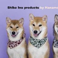 รูปของ Shibainu Thai Hanamori Sou