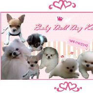 รูปของ babydoll kennel