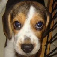 รูปของ Beagle Corner