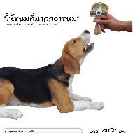 รูปของ Pet2GO