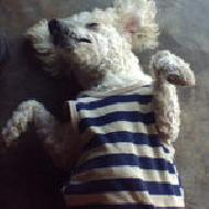 รูปของ doggylove