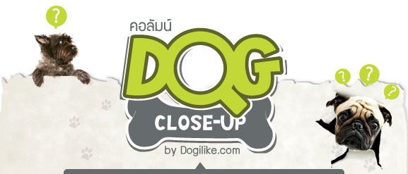 dogilke, dog close-up, ���, �ѵ�ᾷ��, �Ӷ��, �عѢ, ���ʧ���, ��͵�, ������������, infographic, ������