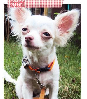 ฮิปโป, dog of the week 53