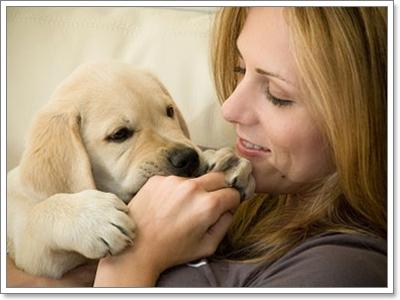Dogilike.com :: แก้ปัญหาน้องหมาชอบเลียพร่ำเพรื่อ
