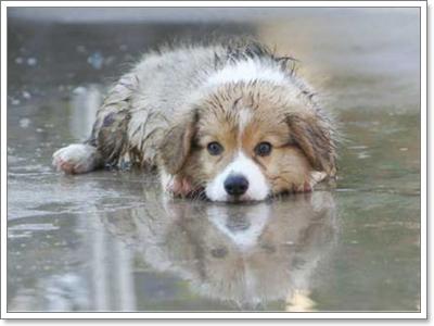 Dogilike.com :: เคลียร์ปัญหา กลิ่นตัวน้องหมาในหน้าฝน