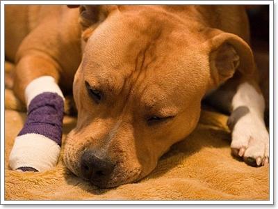 Dogilike.com :: สัญญาณอันตรายที่บ่งบอกว่า น้องหมากำลังป่วย