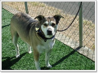 Dogilike.com :: จัดการปัญหา น้องหมาหนีเที่ยว!!