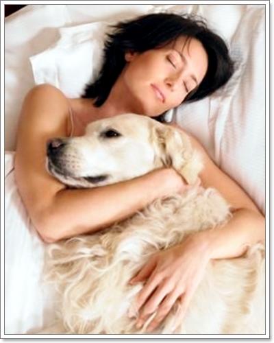 Dogilike.com :: รู้ไว้ ก่อนอนุญาตให้น้องหมามานอนด้วย