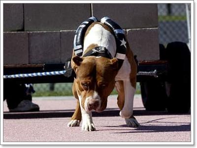 Dogilike.com :: การออกกำลังกายที่เหมาะกับสุนัขสายพันธุ์ (ดุ) พิเศษ