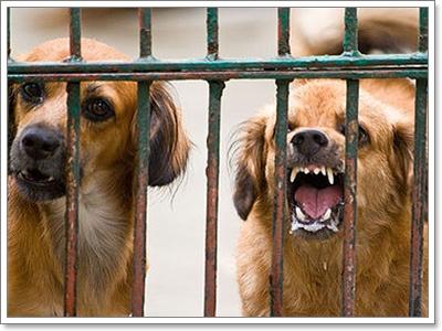 Dogilike.com :: แก้ปัญหาสุนัขดุแบบผิดๆ ยิ่งกระตุ้นให้สุนัขดุยิ่งขึ้น !!
