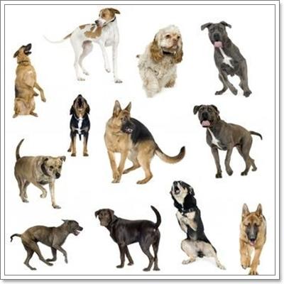 Dogilike.com :: อาหารเฉพาะสายพันธุ์ จำเป็นหรือไม่สำหรับสุนัข?