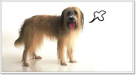 Dogilike.com :: น้องหมาเปียกฝน แล้วจะป่วยเหมือนคนไหม?