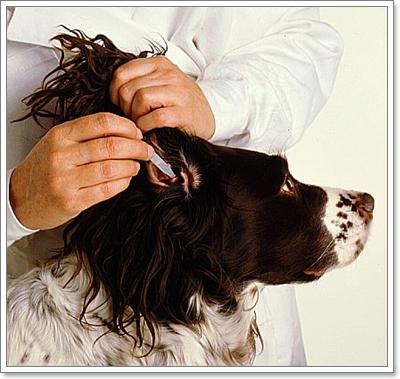 Dogilike.com :: เคล็ด(ไม่)ลับในการดูแลน้องหมาให้มีสุขภาพดีตลอดปี 2013