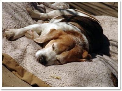 Dogilike.com :: ฉุกเฉิน! เมื่อน้องหมาจะคลอดลูก เราต้องทำยังไงบ้าง
