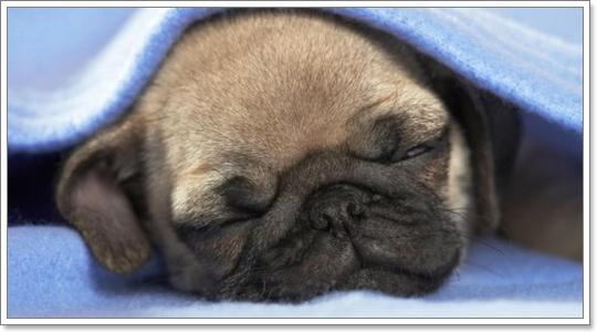 Dogilike.com :: ดูแลแม่หมาและลูกหมาหลังคลอด ยังไงให้ปลอดภัย?