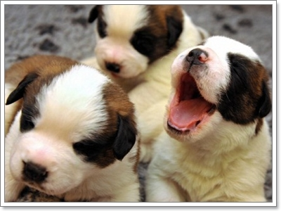 Dogilike.com :: ดูแลลูกหมายังไงให้ถูกวิธี เมื่อเราต้องรับบทแม่จำเป็น