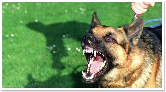 Dogilike.com :: เลี้ยงสุนัขผิดๆ มีสิทธิ์ทำให้สุนัข ดุ ได้โดยไม่รู้ตัว!!